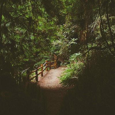 Explore Muir Woods National Monument Muir Woods National Monument Parking