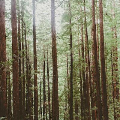 Explore Muir Woods National Monument Muir Woods National