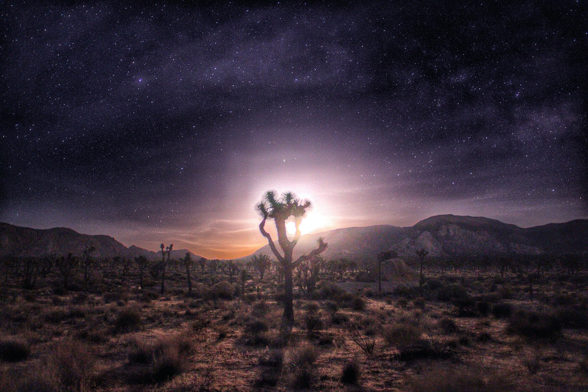 5 Reasons to Explore Joshua Tree National Park