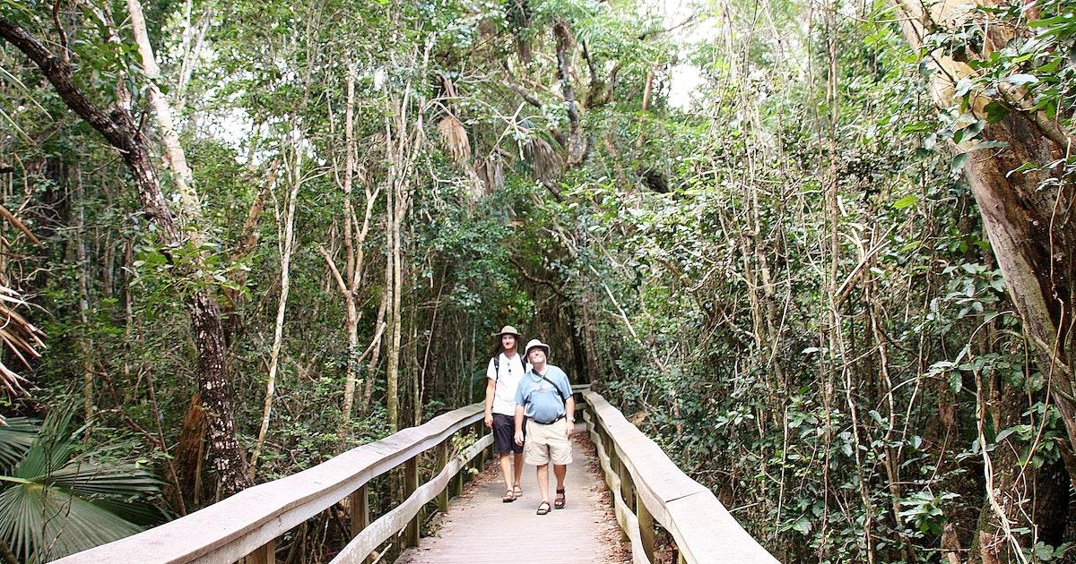 Walk The Mahogany Hammock Trail In Everglades Np