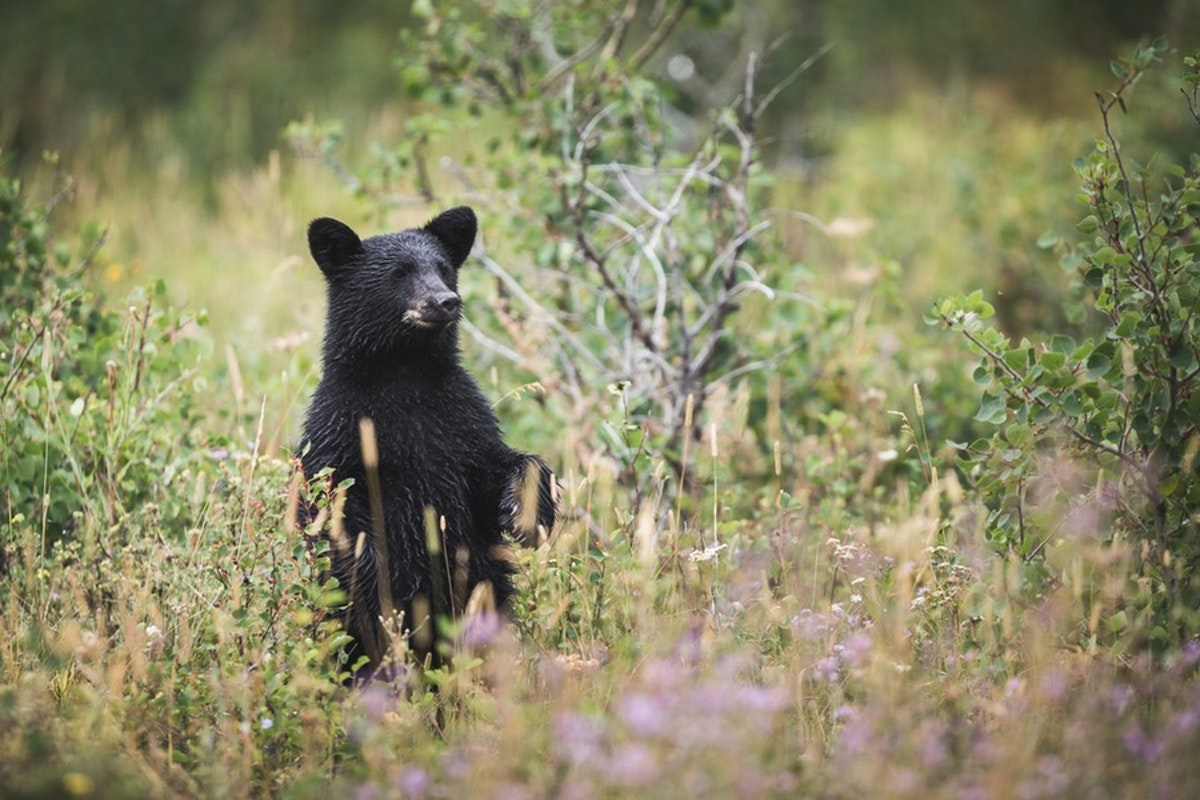 6 Tips For Landing A Job As A Wildlife Biologist
