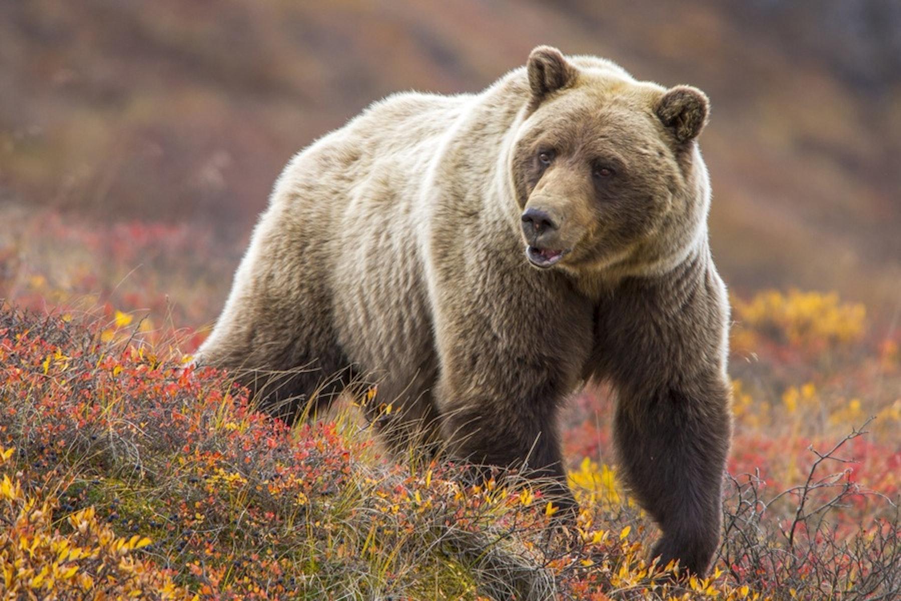 Wildlife Biology top ten of everthing