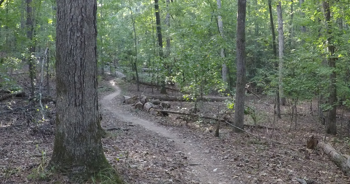 Bike The Outer Loop At Harbison State Forest , Firebreak