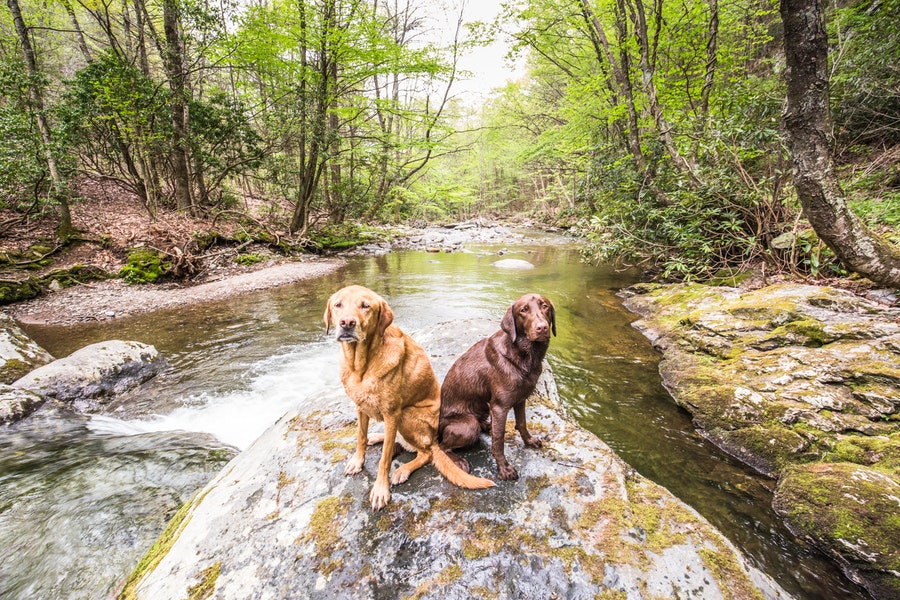 Why you need to explore shenandoah national park for Shenandoah national park fishing