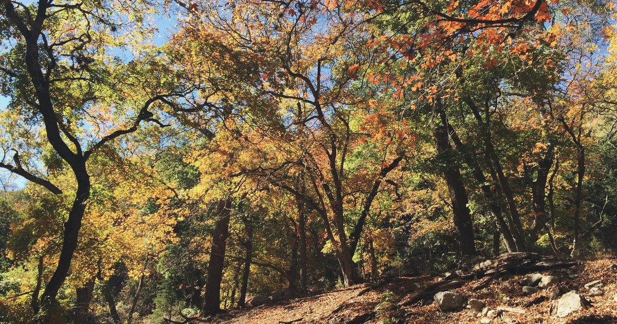 Maple Hill Auto >> Hike the East Trail at Lost Maples, East Trailhead, Lost Maples Natural Area