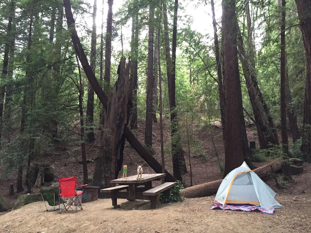 Camp At Ventana Campground Big Sur Ventana Campground