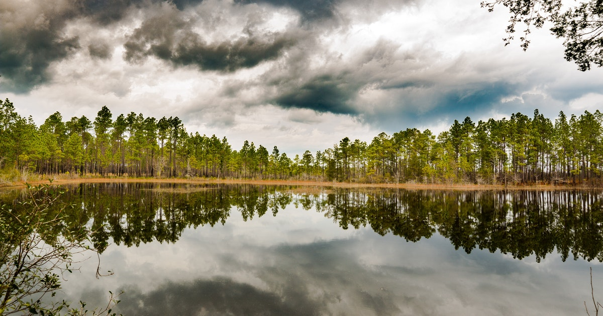 Auto Parts Store Nearby >> Explore Green Swamp Nature Preserve, Green Swamp Trailhead