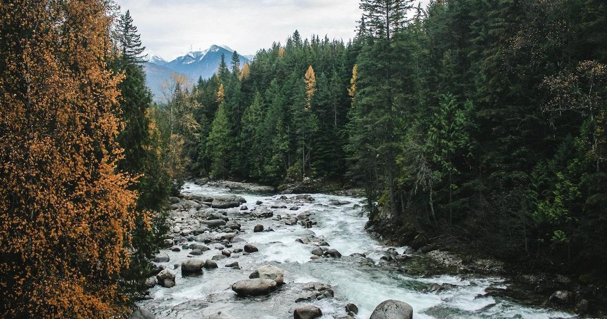 Lucky 8 Auto >> Hike the Kaslo River Trail, Kaslo River Trail