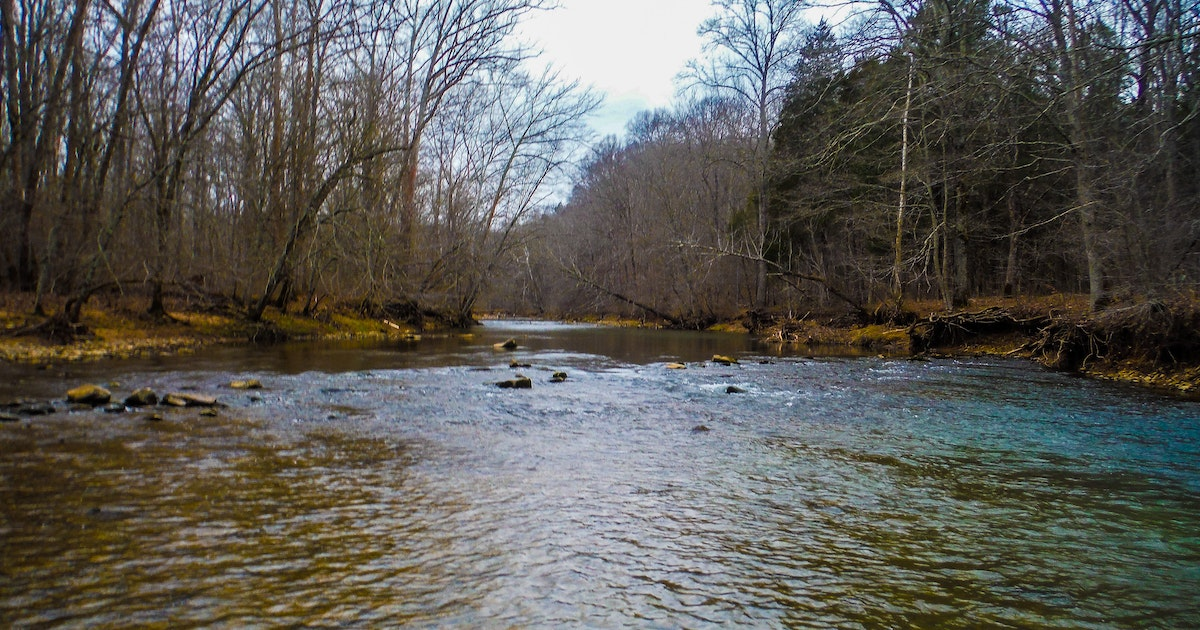 Fly fish otter creek outdoor recreation area kentucky for Fly fishing kentucky
